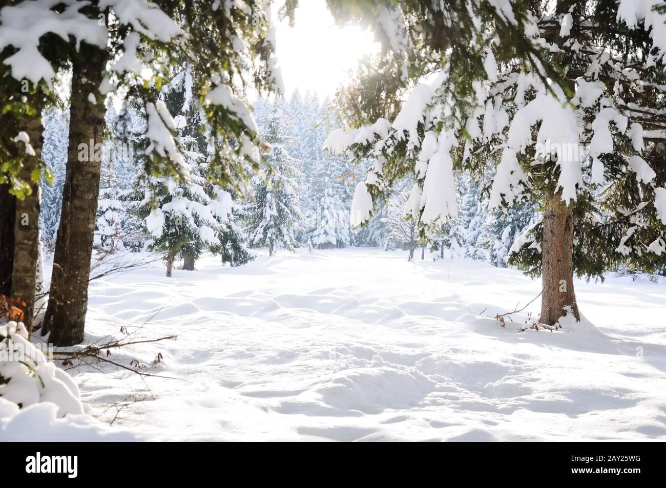 Invierno hermoso árbol de escena y la nieve Foto de stock