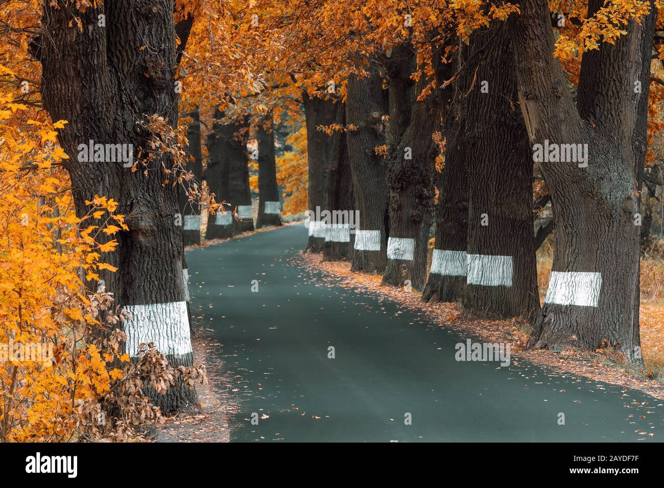 árboles de color caída en el callejón en otoño Foto de stock