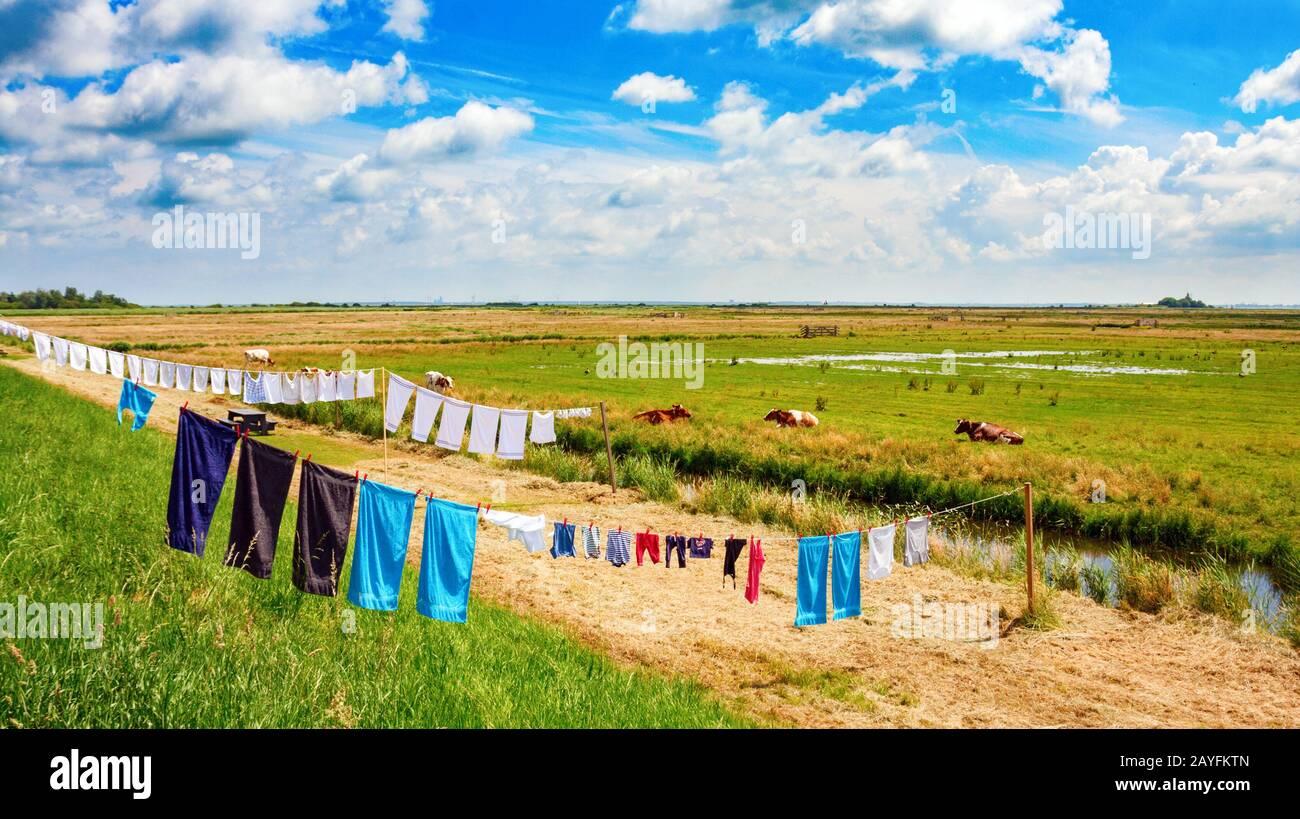 Típico holandés plano de la polder paisaje con la colada en una línea de ropa que se seca en el sol. Waterland, Holanda Del Norte, Holanda. Foto de stock