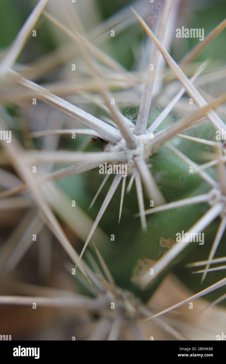 Hermoso y suculento cactus creciendo en un jardín desértico. Foto de stock