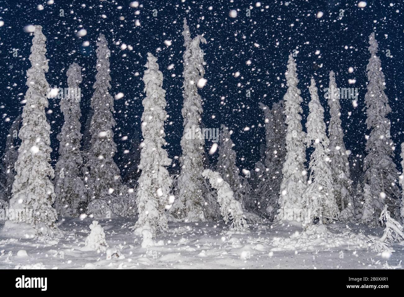 Nevada nocturna en la reserva natural de Stubba, Escandinavia, Laponia, Norrbotten Foto de stock