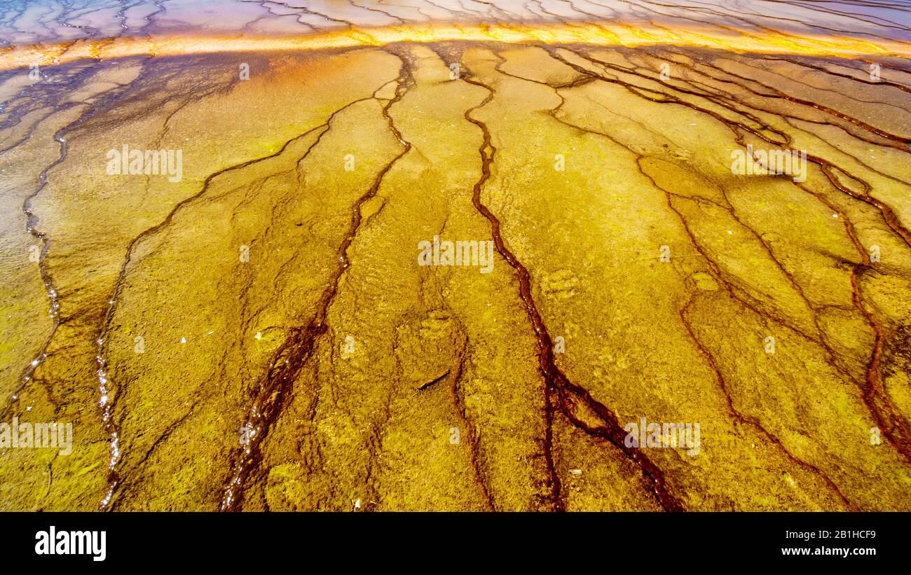 Los Coloridos Sombreros Bacterianos Del Grand Prismatic Spring En Yellowstone National Park, Wyoming, United Sates Foto de stock