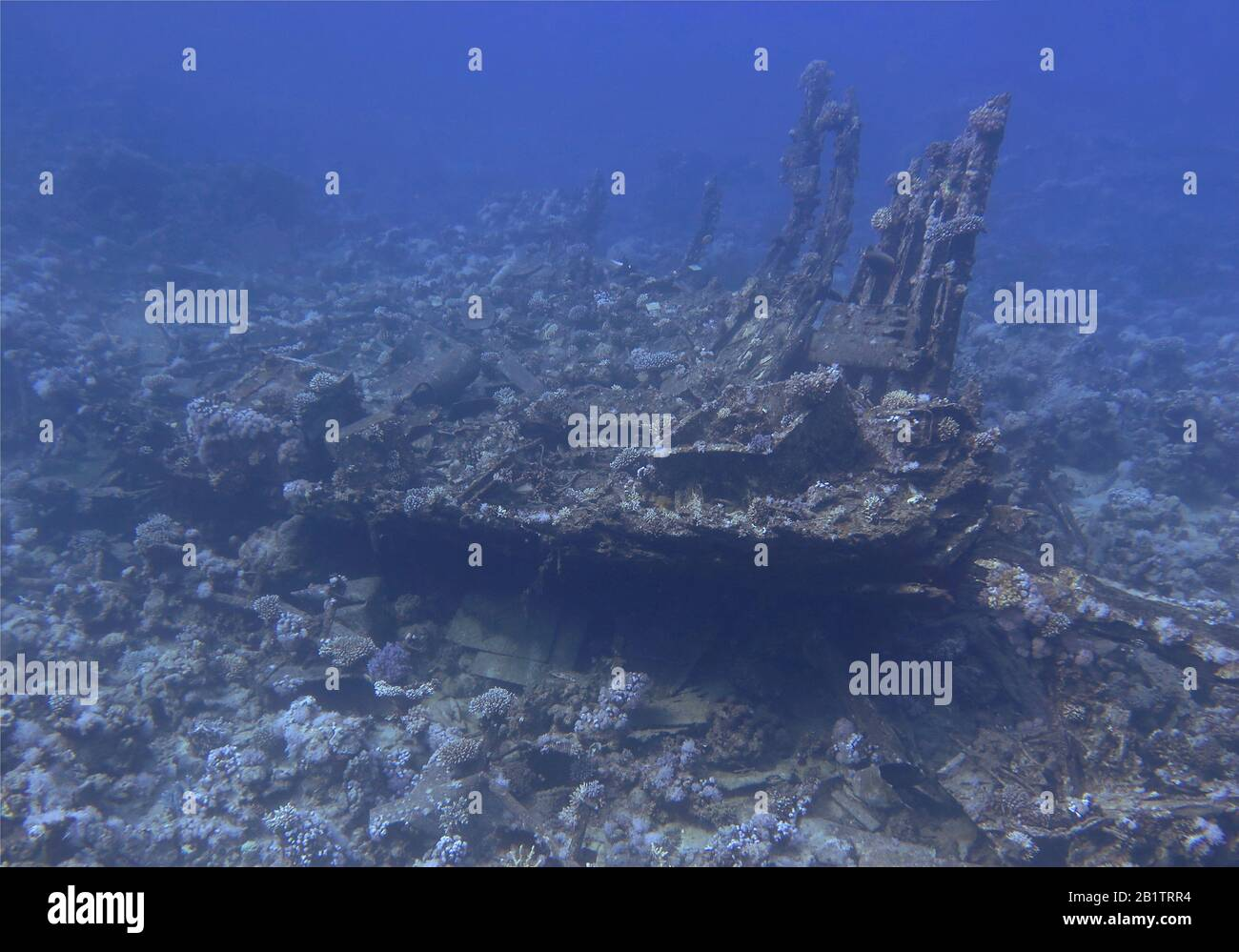 Rack, Rotes Meer, Aegypten Foto de stock