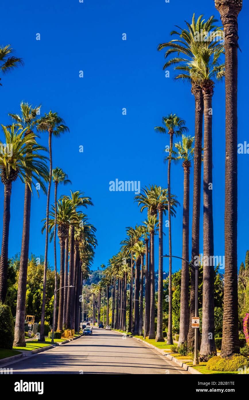 Una calle bordeada de palmeras en Beverly Hills (los Angeles), California USA. Foto de stock
