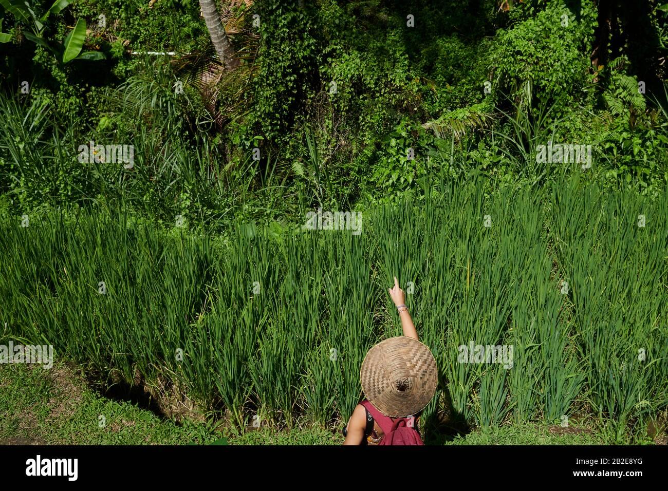 Niña con un sombrero de paja apuntando a una terraza de arroz en Bali Foto de stock