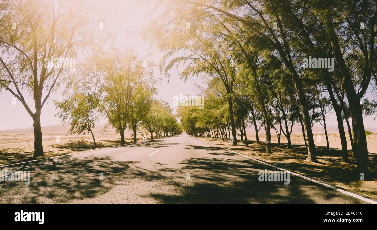 Largo camino de asfalto vieqed terreno con árboles a ambos lados - concepto de viaje infinito en día soleado - libertad y sensación de vacaciones Foto de stock