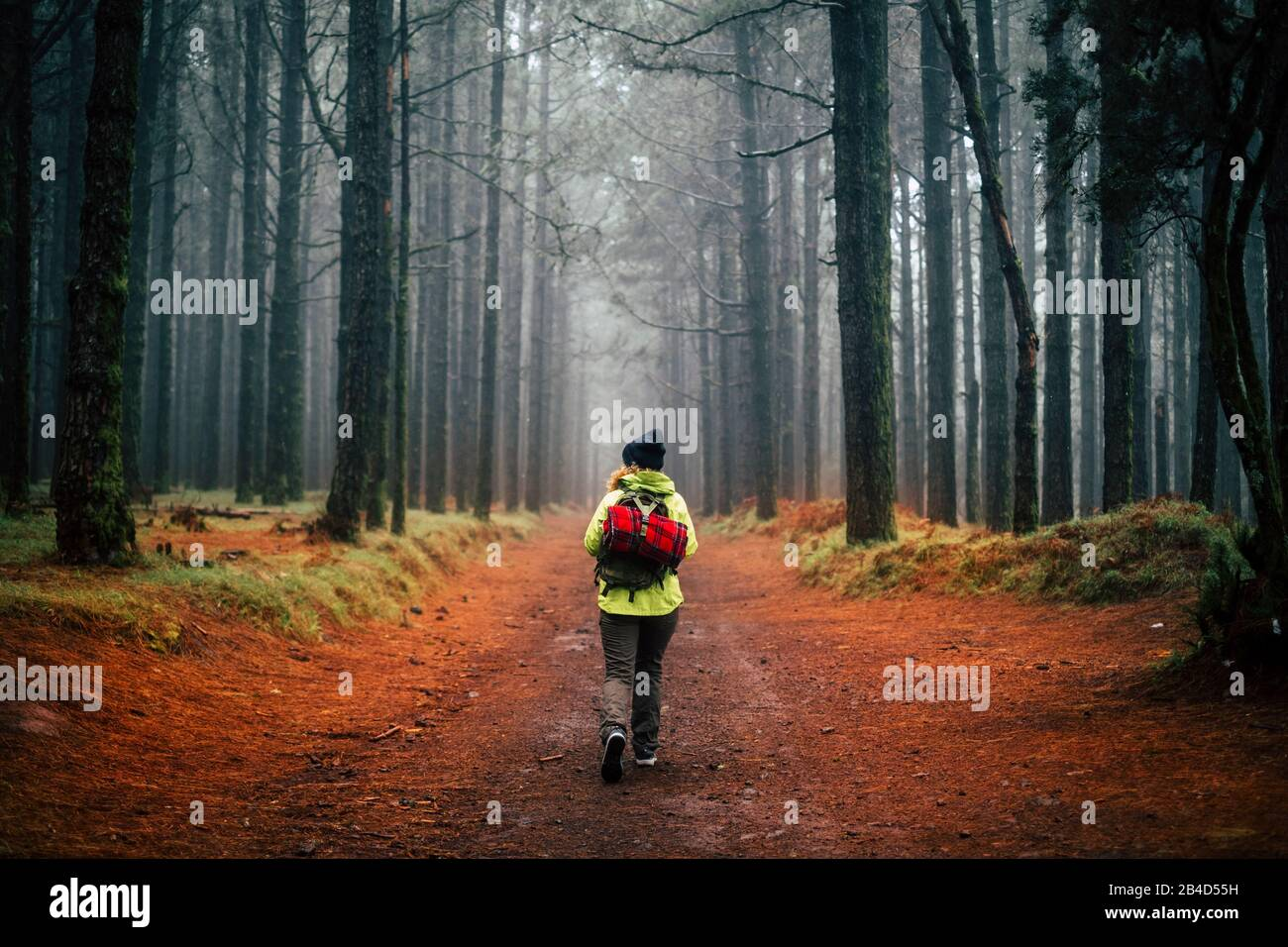 Mujer aventura caminar sola en el medio de un bosque de pinos hgh en la temporada de otoño y la niebla clima sensación - libertad y actividades de ocio al aire libre en el concepto de la gente del parque Foto de stock