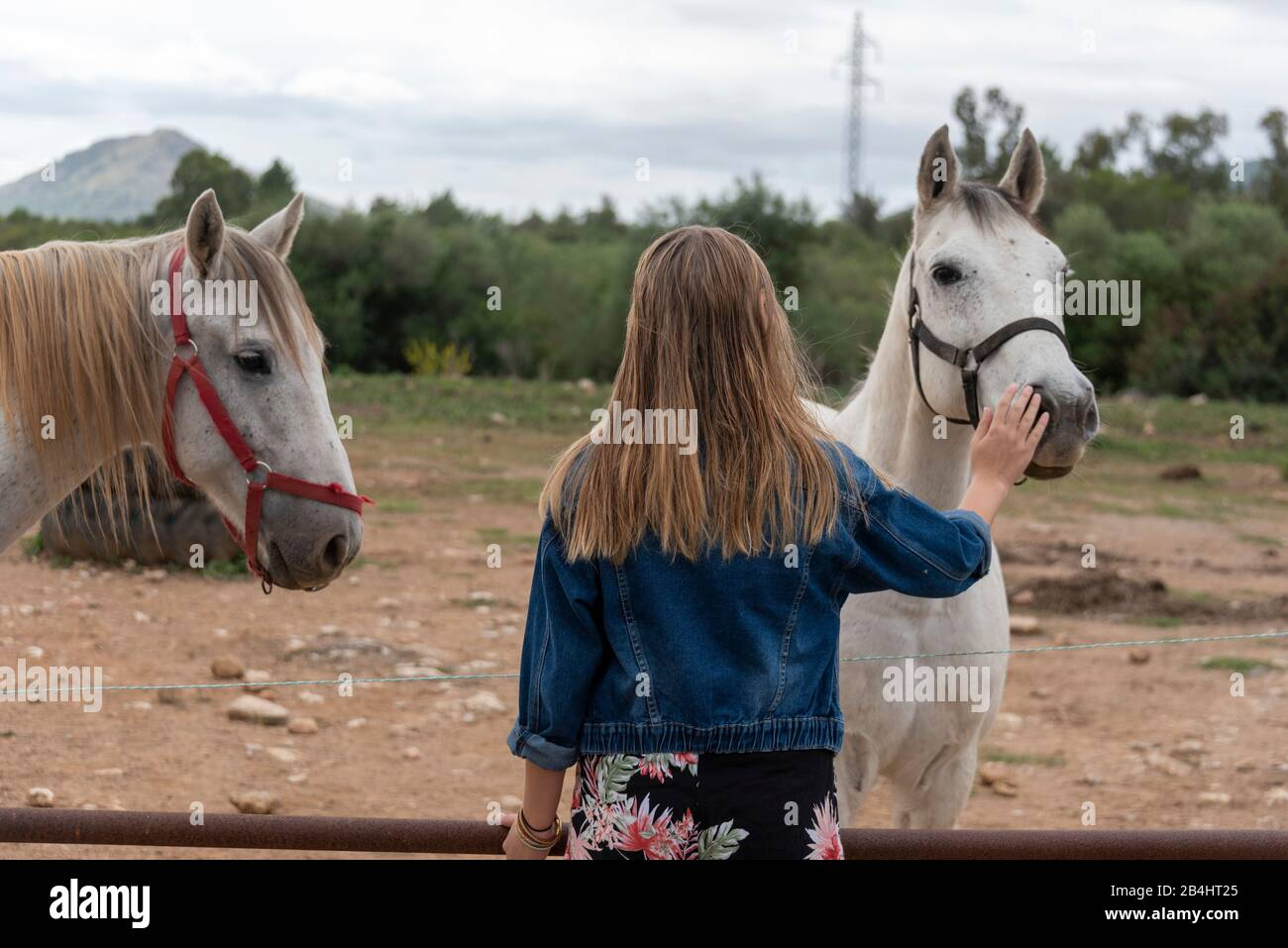Pferd story mit Bringing Down