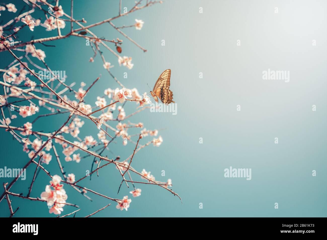 Hermosa mariposa en una flor Margarita consumiendo su néctar. Foto de stock