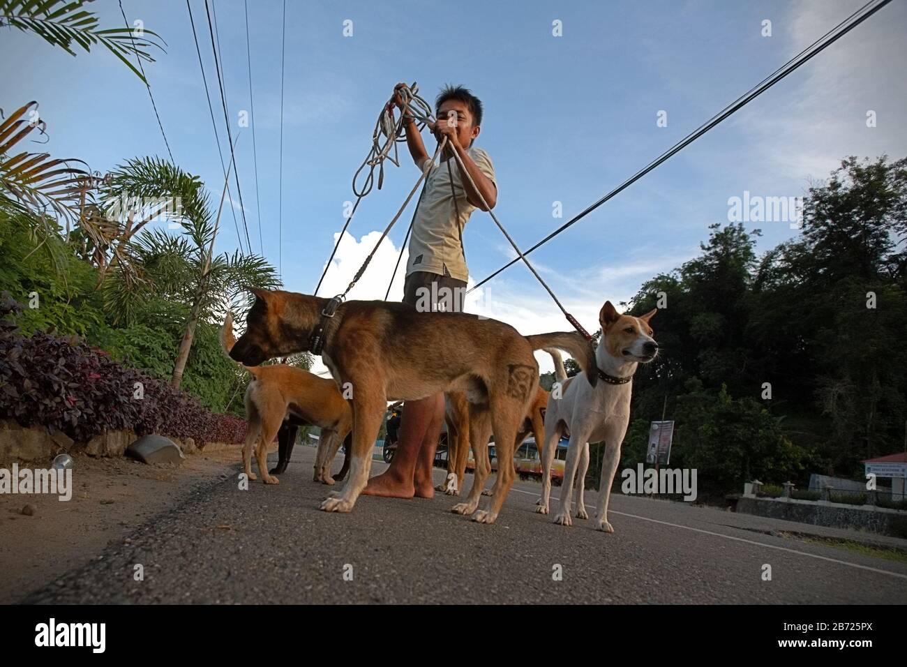 Retrato de un joven con perros de caza en la provincia de Sumatra Occidental, Indonesia. Foto de stock