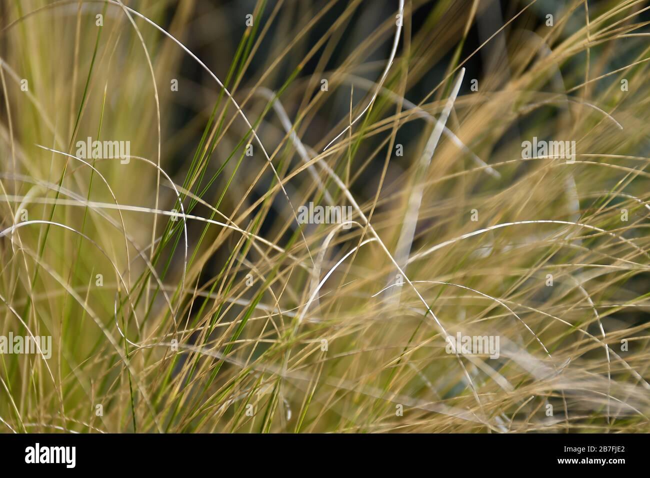 Macro de hierbas de la fuente Foto de stock