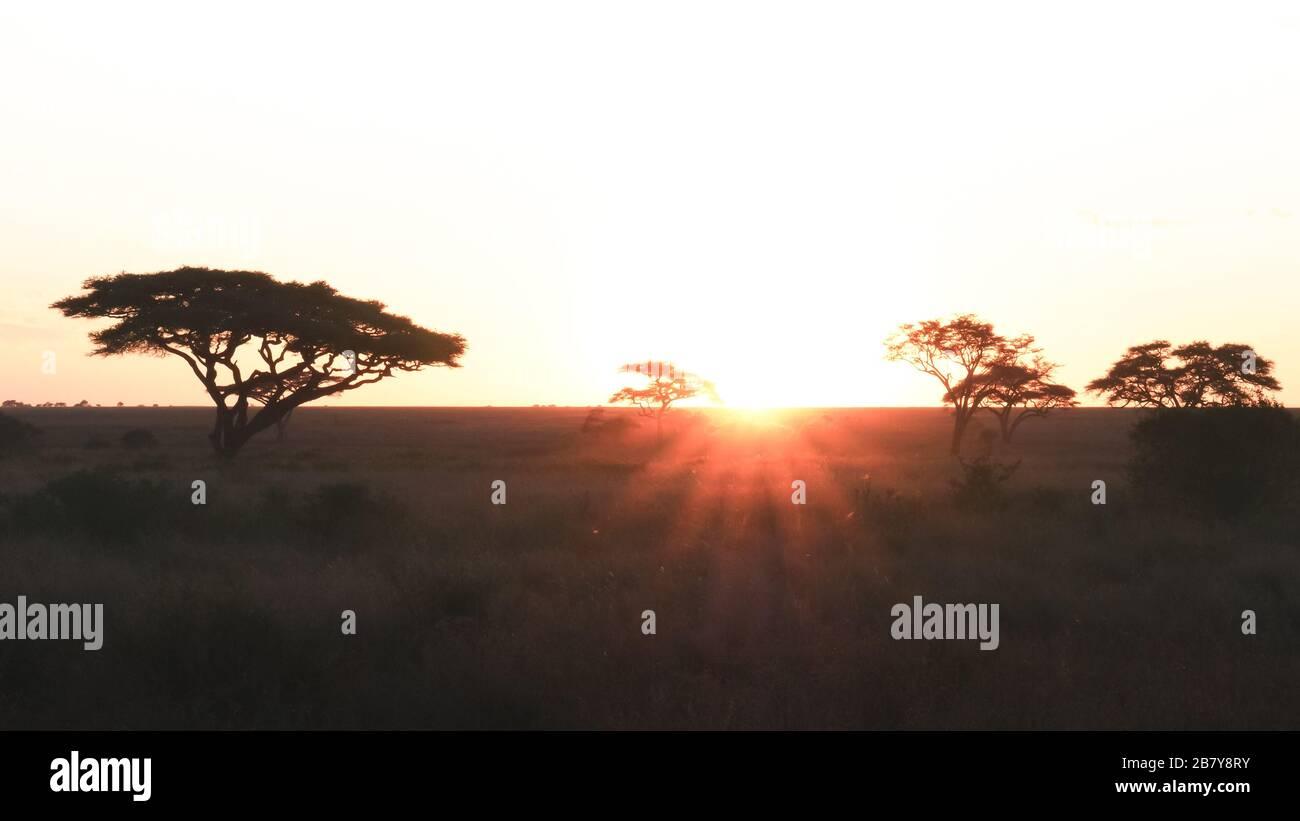 puesta de sol y acacias en el parque nacional serengeti en tanzania Foto de stock