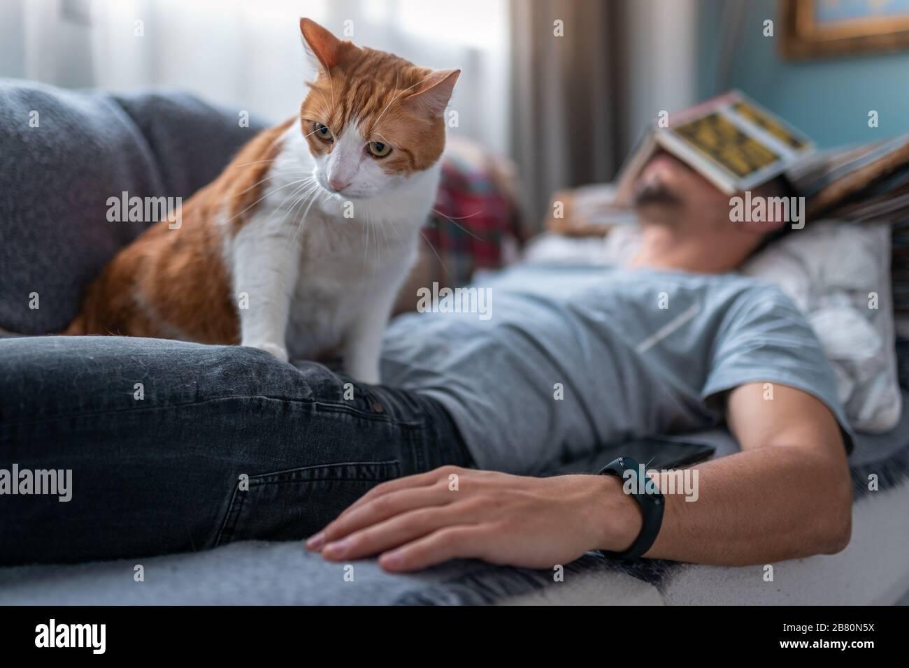 El joven se queda dormido en el sofá con un libro en la cara. Un gato blanco y marrón se sienta encima de él Foto de stock