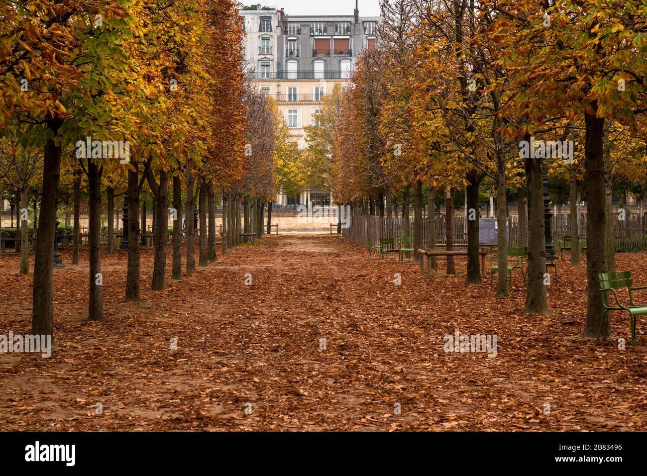 Foto de un camino a través de árboles que derraman sus hojas en otoño en los Jardines de las Tullerías de París, Francia. Foto de stock
