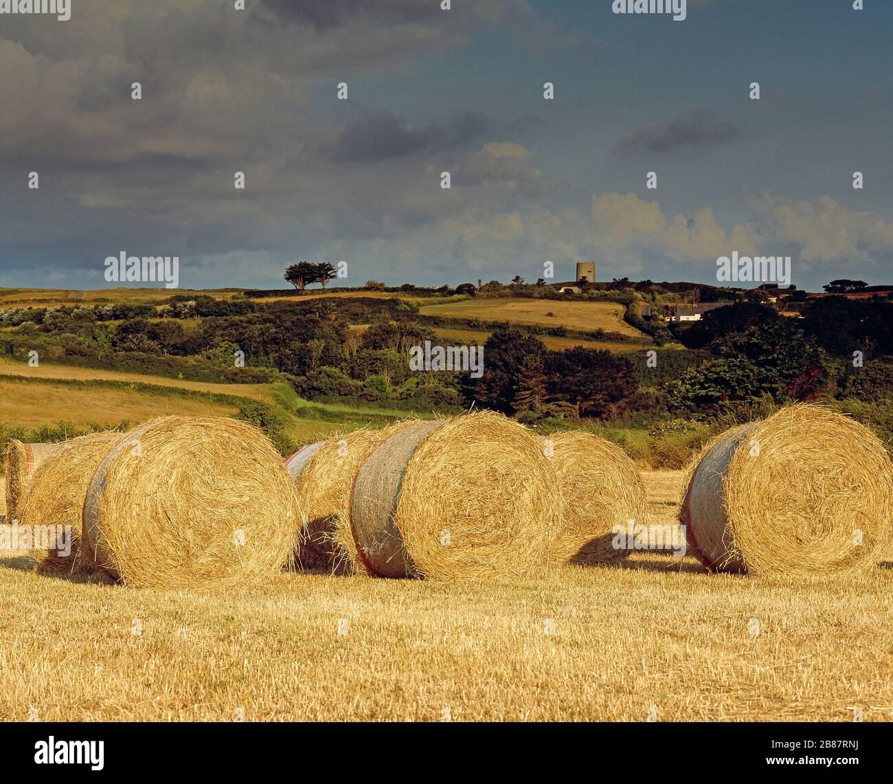 Islas del Canal. Guernsey. Campo rural. Fardos de paja en el campo. Foto de stock