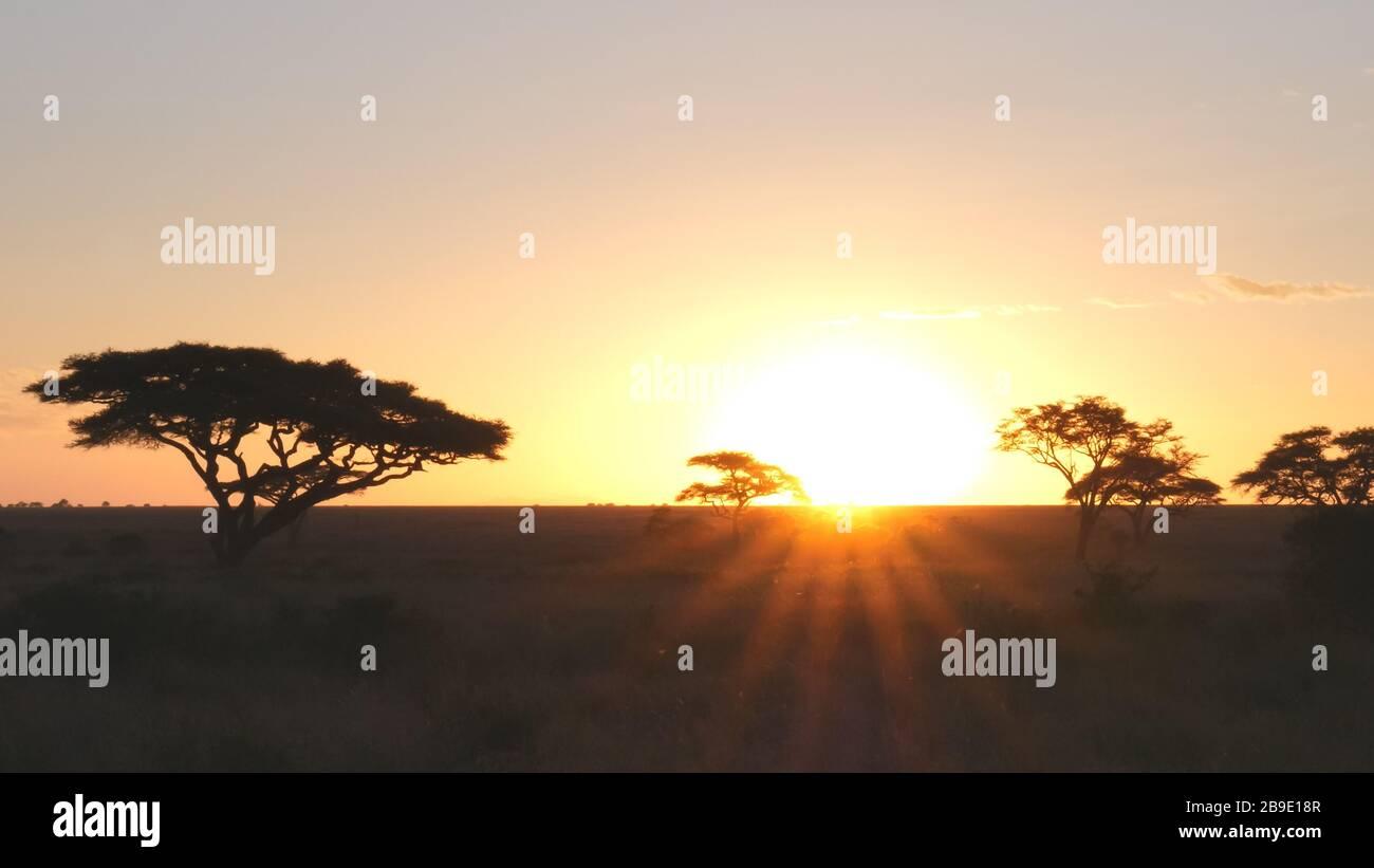 puesta de sol de árboles de acacia en serengeti np Foto de stock