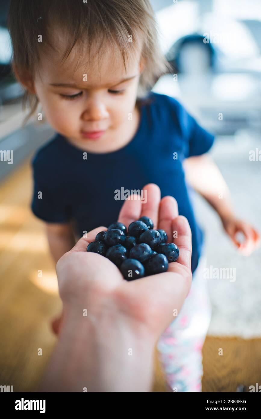 Adorable bebé feliz de ver la mano llena de arándanos. Retrato de una niña de 1 - 2 años. Foto de stock