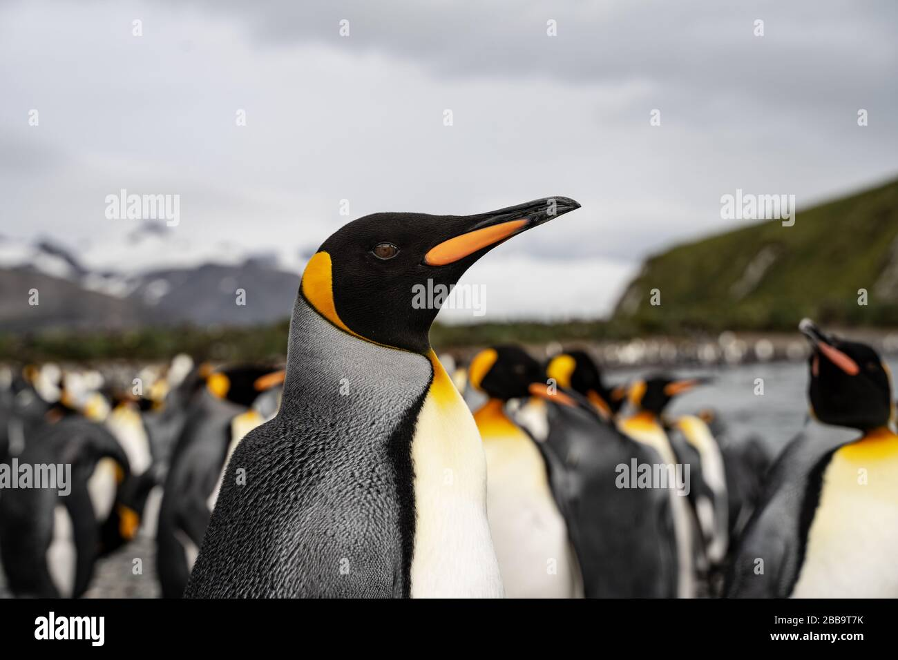 grupo de pingüinos en la antártida Foto de stock