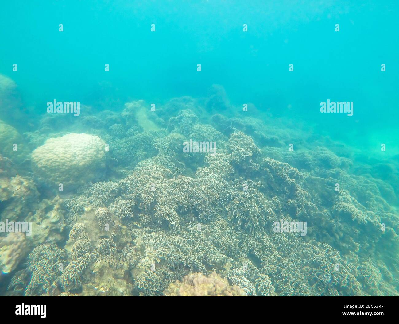 Coloridos corales bajo el mar en Tailandia. Foto de stock