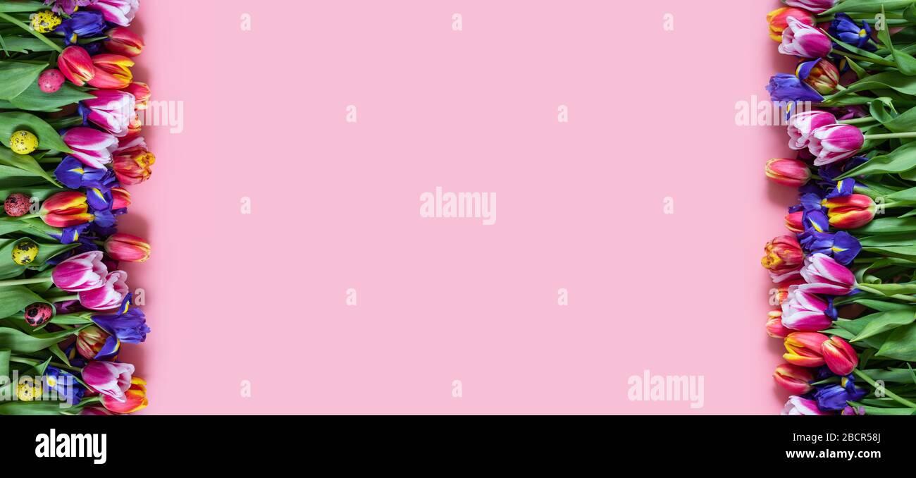 Borde de Pascua con flores de primavera y coloridos huevos de codorniz sobre fondo rosa. Banner. Espacio de copia, vista superior, disposición plana. Foto de stock