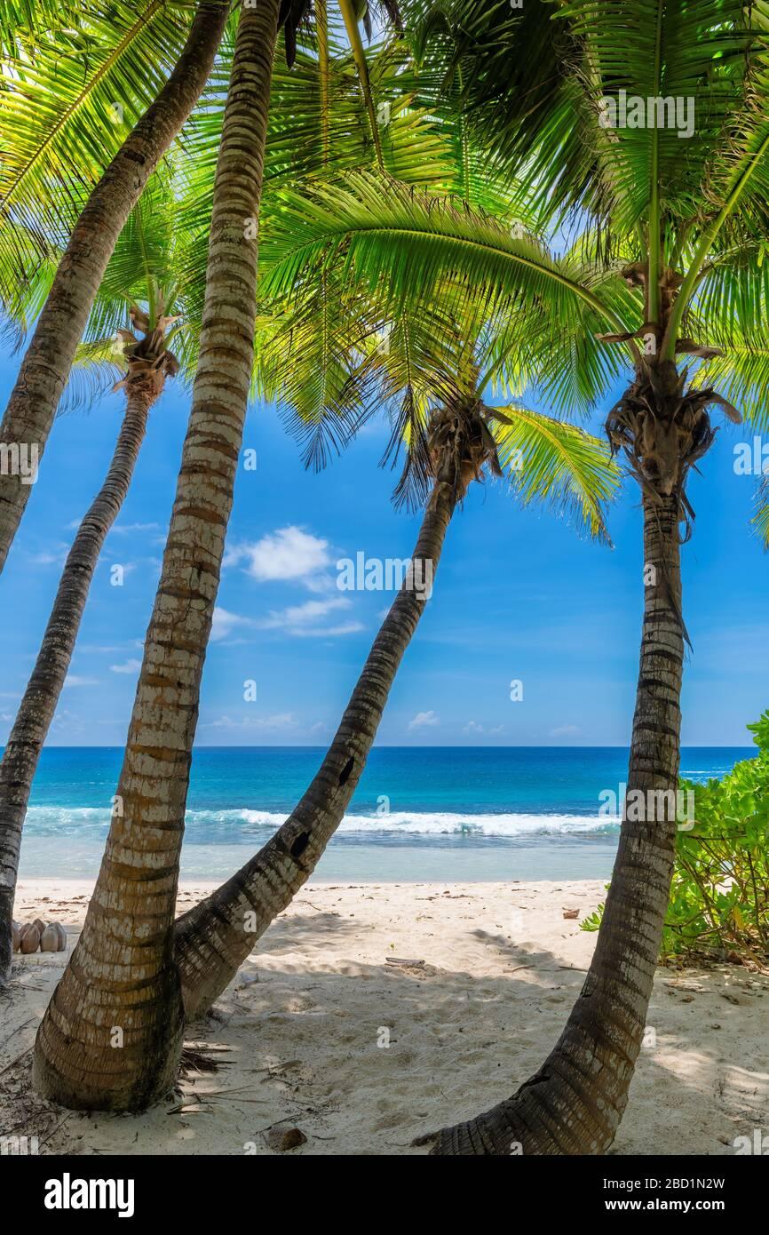 Caribe tropical soleado paraíso playa Foto de stock