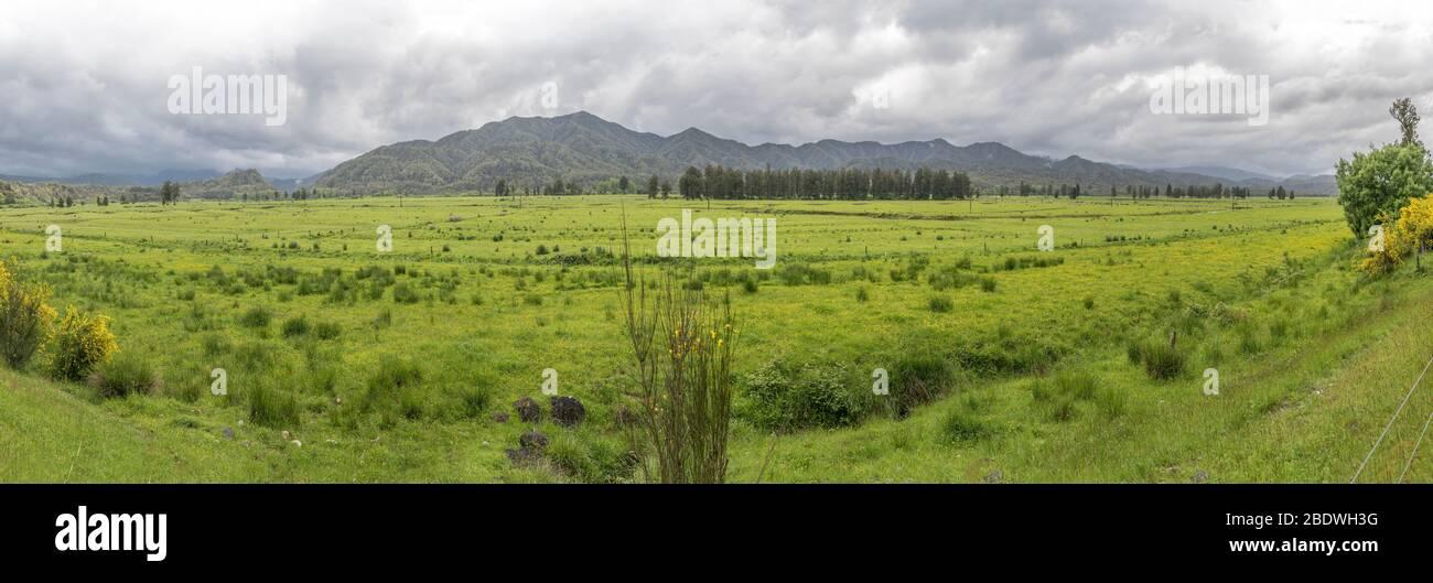 Paisaje con verdes y exuberantes praderas bajo cielo nublado, rodado con luz de primavera nublado cerca de Inangahua Junction, Costa Oeste, Isla Sur, Nueva Zelanda Foto de stock