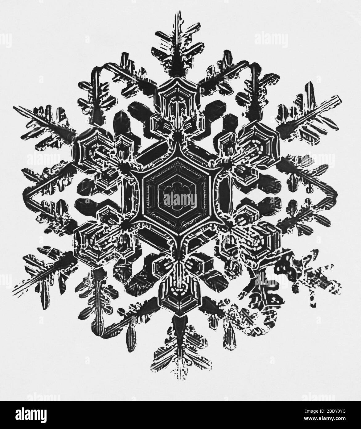 Copo de nieve Foto de stock