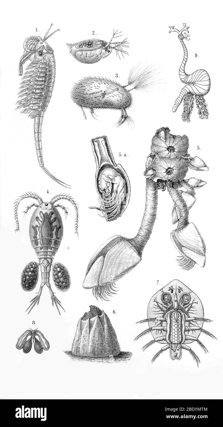 Crustáceos Foto de stock
