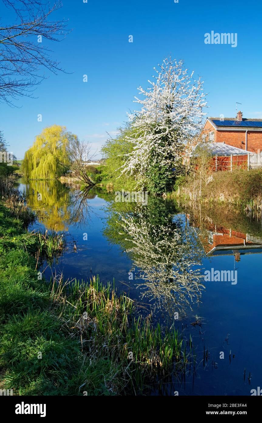 Reino Unido, South Yorkshire, Barnsley, Elsear Canal y sendero con Blossom en plena floración Foto de stock