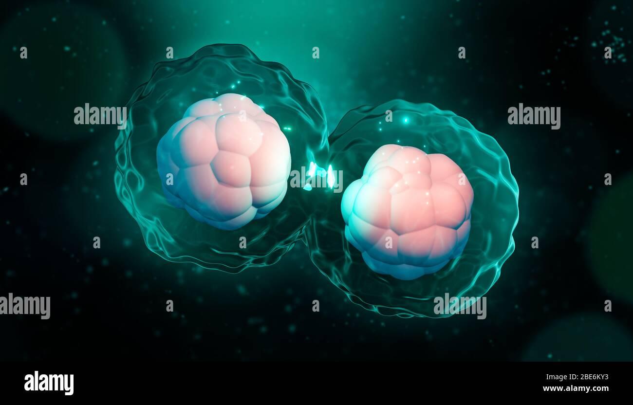 Ilustración de la representación de la división celular, mitosis o meiosis artisitica 3D. Replicación genética de células con núcleo, membrana y citoplasma. Genética, bi Foto de stock