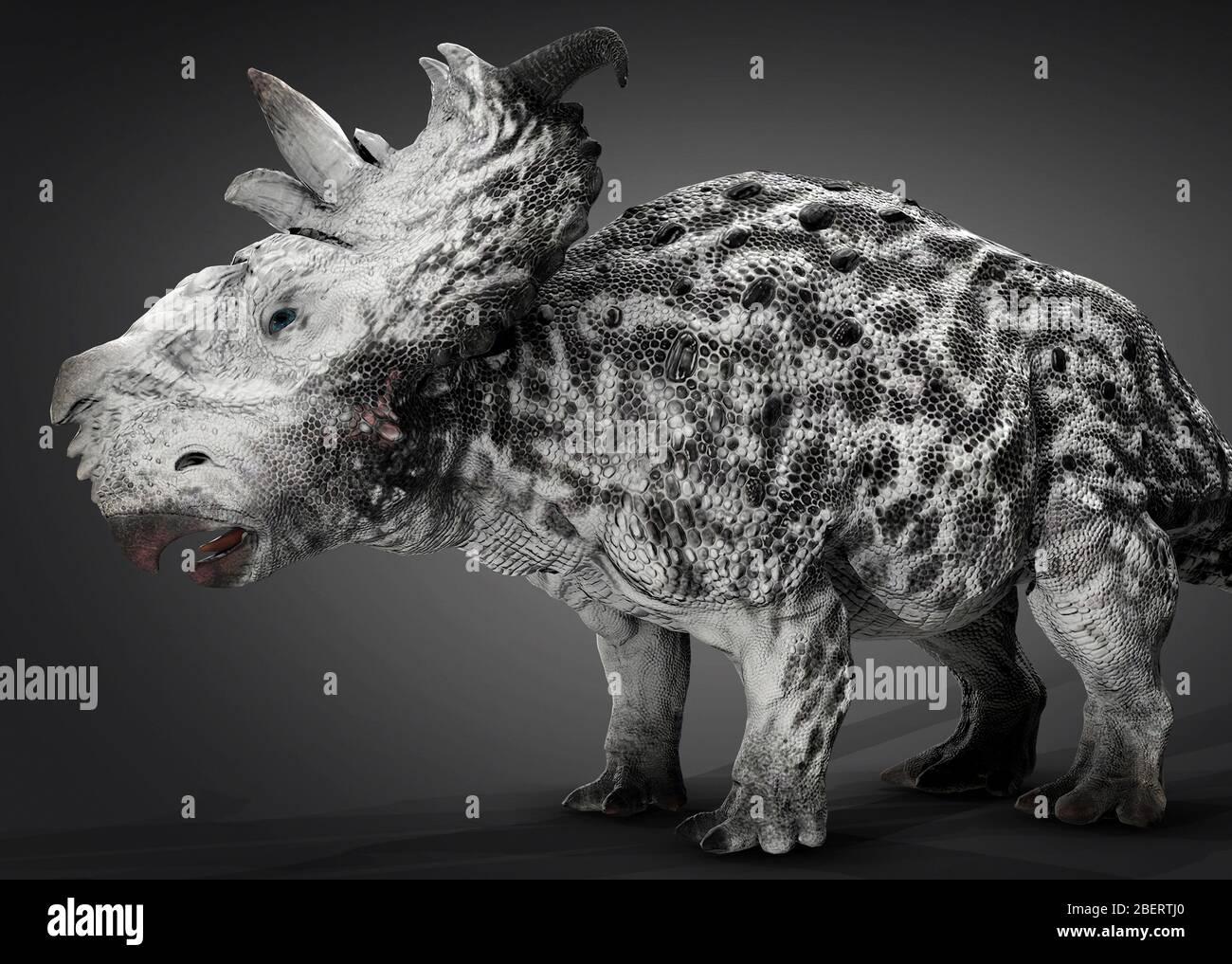 Dinosaurio Pachyrhinosaur, vista lateral sobre fondo gris. Foto de stock