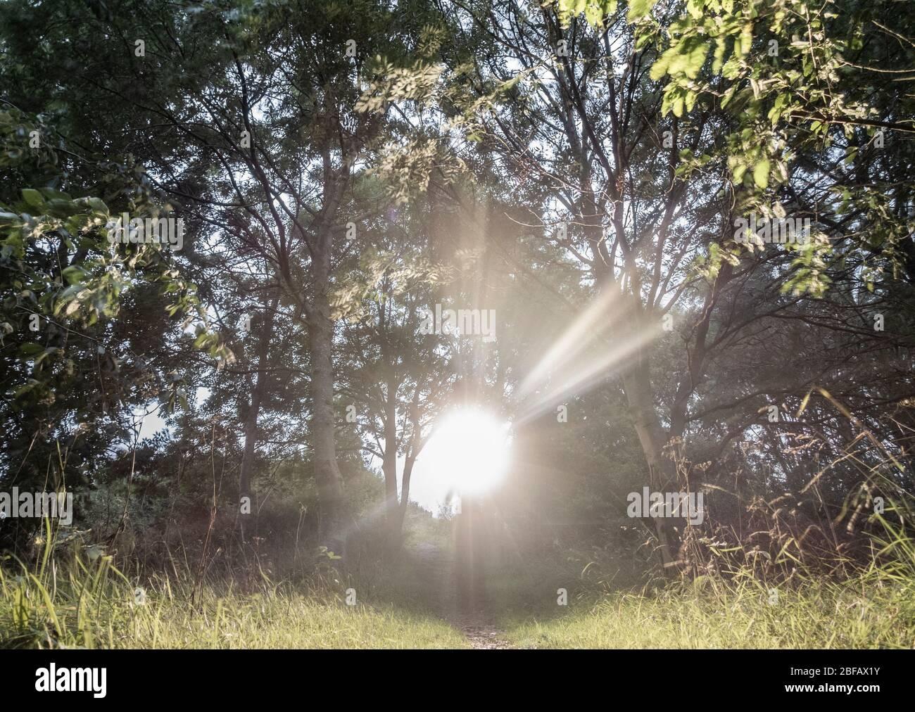 Linterna, haz de luz en los bosques, bosque por la noche. Concepto espeluznante, asustadizo Foto de stock