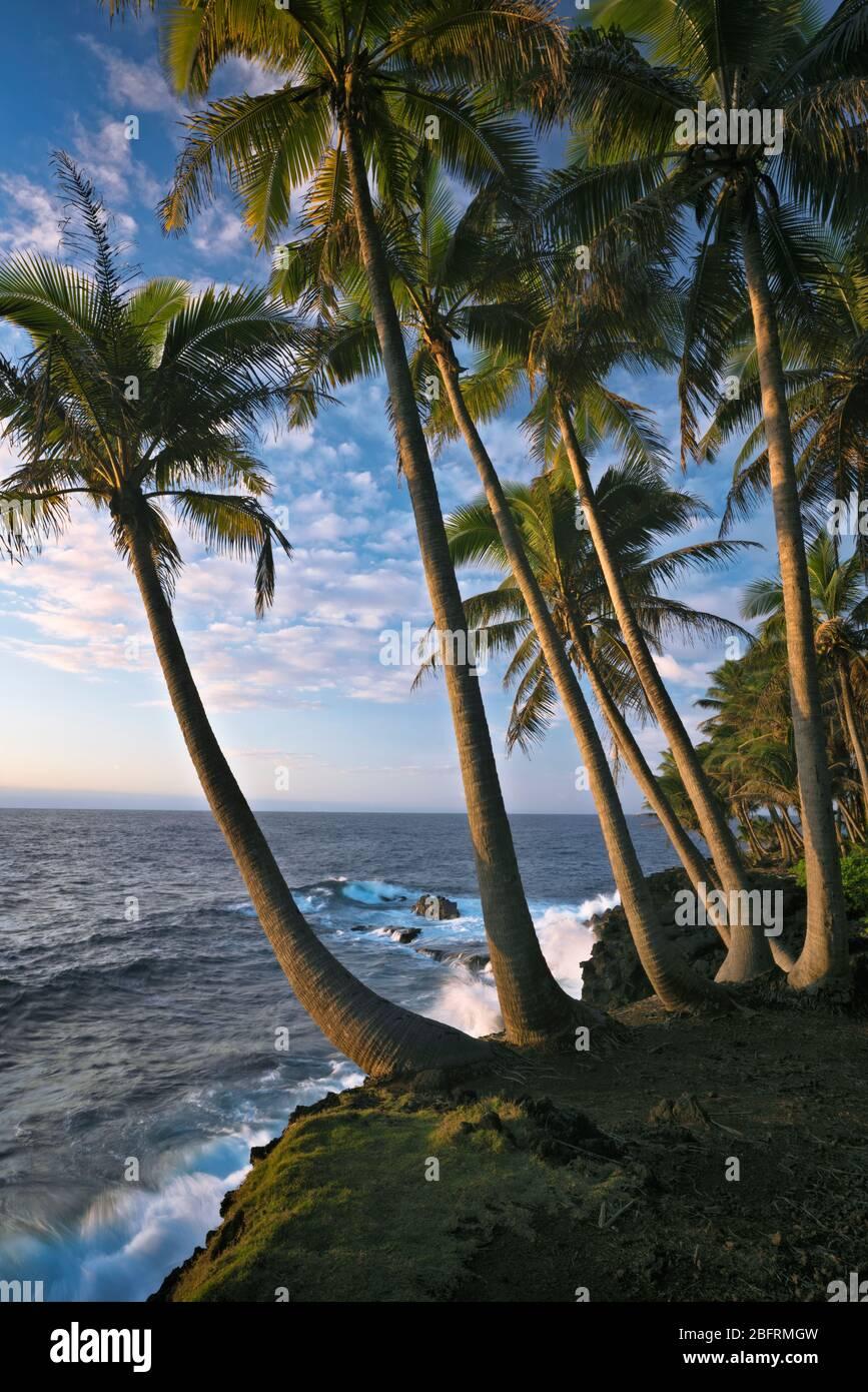 Primera belleza ligera a lo largo de la costa de Puna bordeada de palmeras en la Gran Isla de Hawai. Foto de stock