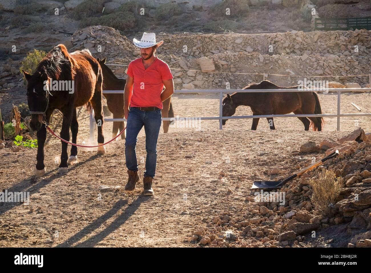 Camiseta roja vaquero campesino hombre trabajando con caballos en el campo al aire libre lado lugar - buena alternativa libre estilo de vida para la gente que disfruta de la naturaleza y los animales Foto de stock