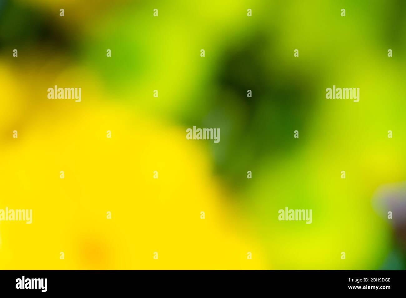 Una fotografía abstracta de flores que muestran colores brillantes y vibrantes Foto de stock