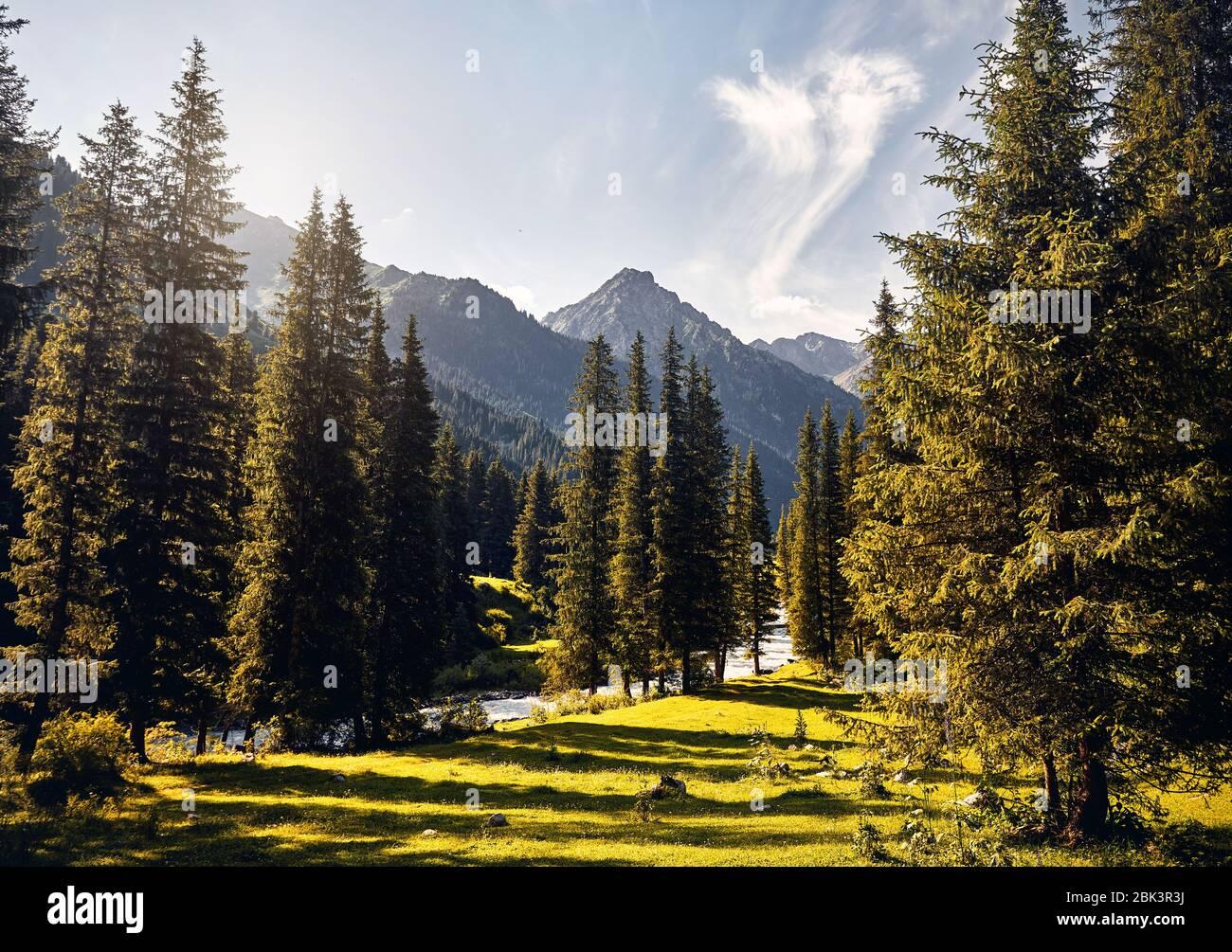 Paisaje de río y valle de montaña con abetos y pico nevado en Karakol, parque nacional de Kirguistán Foto de stock
