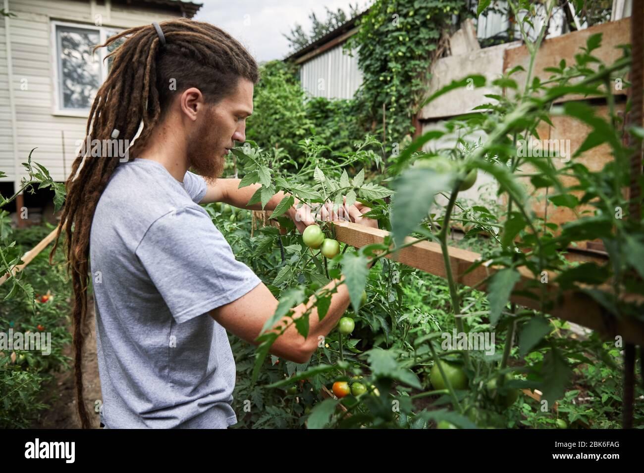 Agricultor barbudo con dreadlocks está trabajando en el jardín en el patio de su casa. La agricultura natural y el concepto de alimentación saludable Foto de stock
