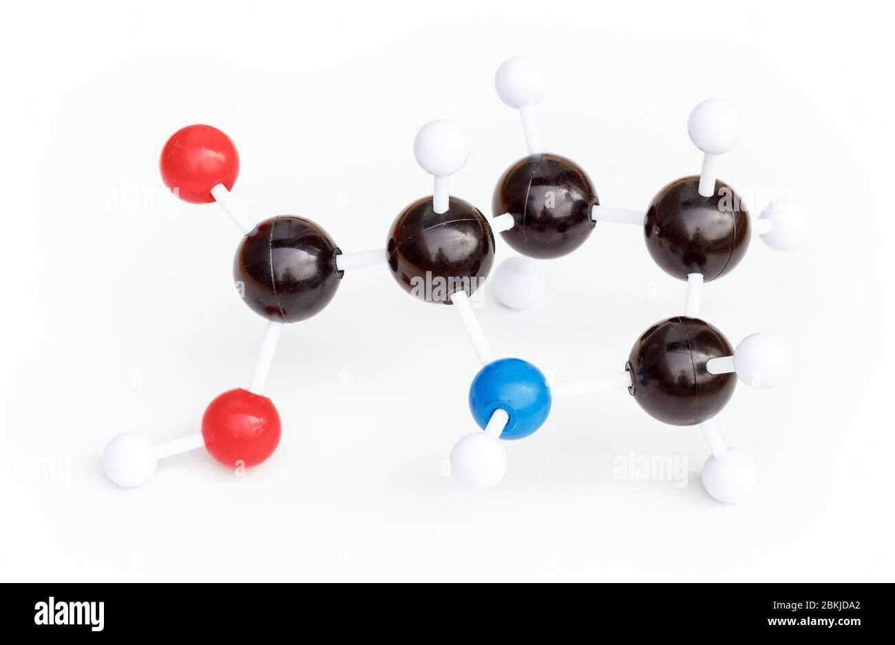 Modelo de bola y palo de plástico de una molécula Proline o L-Proline (Pro) sobre un fondo blanco. Proline es uno de los aminoácidos proteinogénicos. Foto de stock