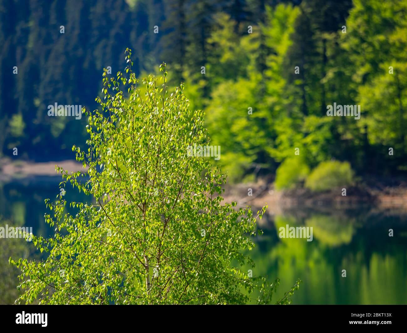 Temporada de primavera en el bosque verde lago Lokve Croacia Europa Foto de stock