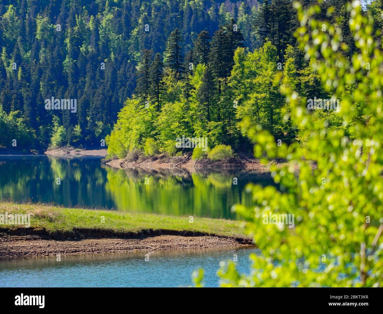 Temporada de primavera en bosque verde Lokve lago Croacia Europa Foto de stock