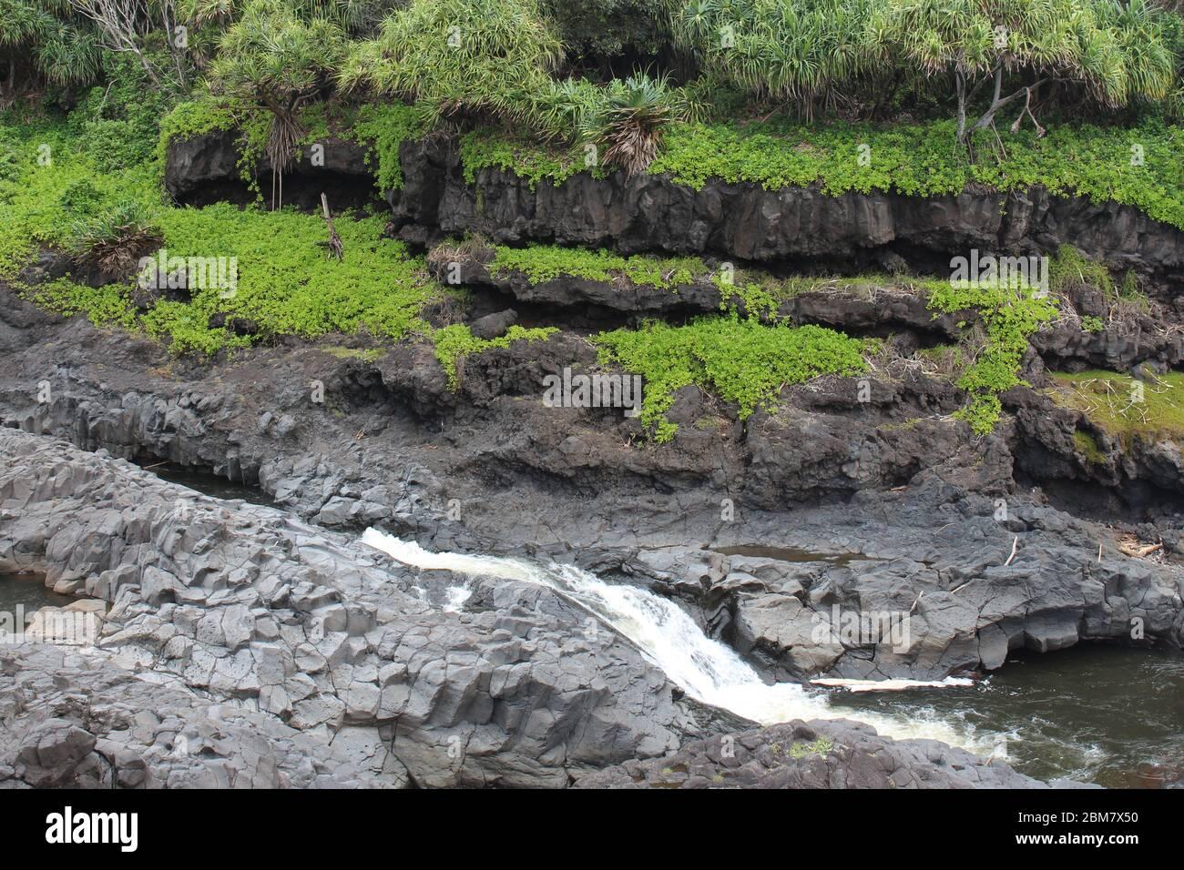 Arroyo Palikea que corre a través de rocas volcánicas con taccada Scaevola y árboles tropicales creciendo en la roca en el Oheo Gulch en Hana, Maui, Hawaii, Estados Unidos Foto de stock
