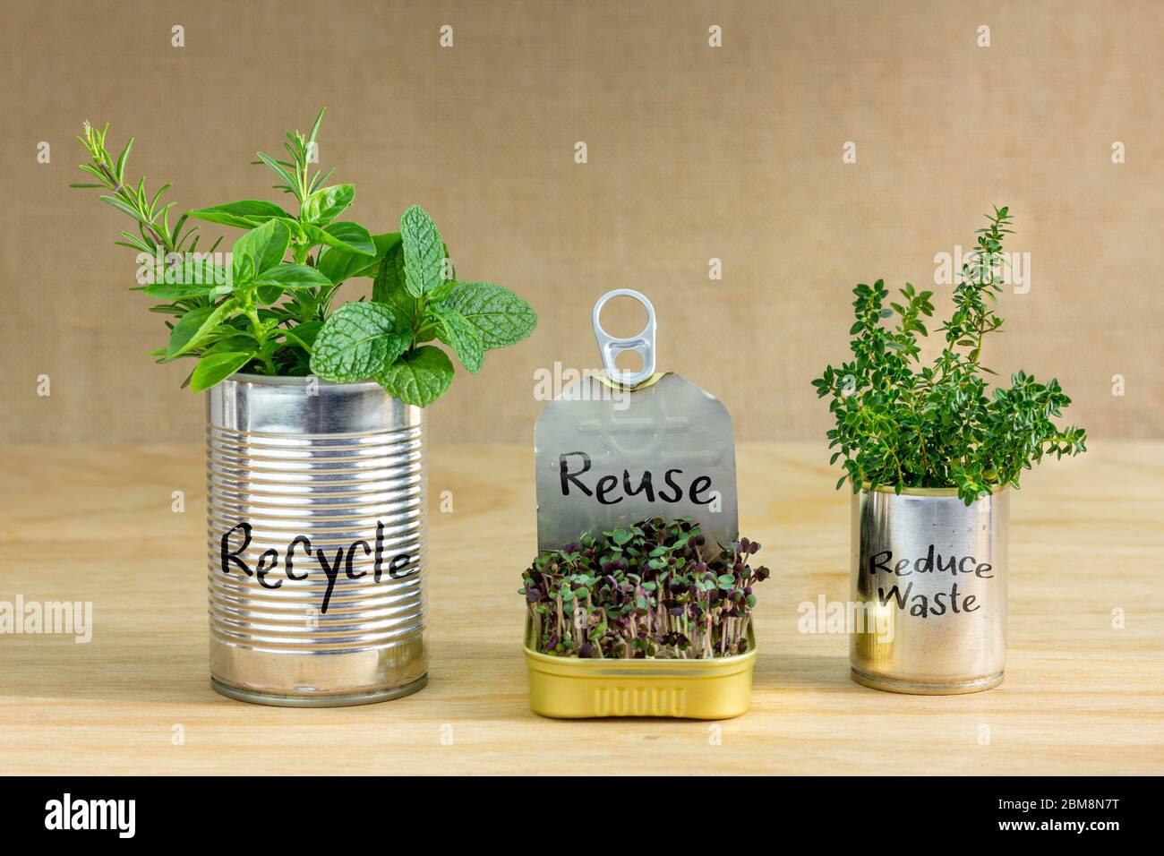 Latas de lata reutilizadas que contienen hierbas y verduras de ensalada en crecimiento con Reciclar, reutilizar, reducir el texto de residuos escrito en latas. Crezca su propio, cero residuos en casa Foto de stock