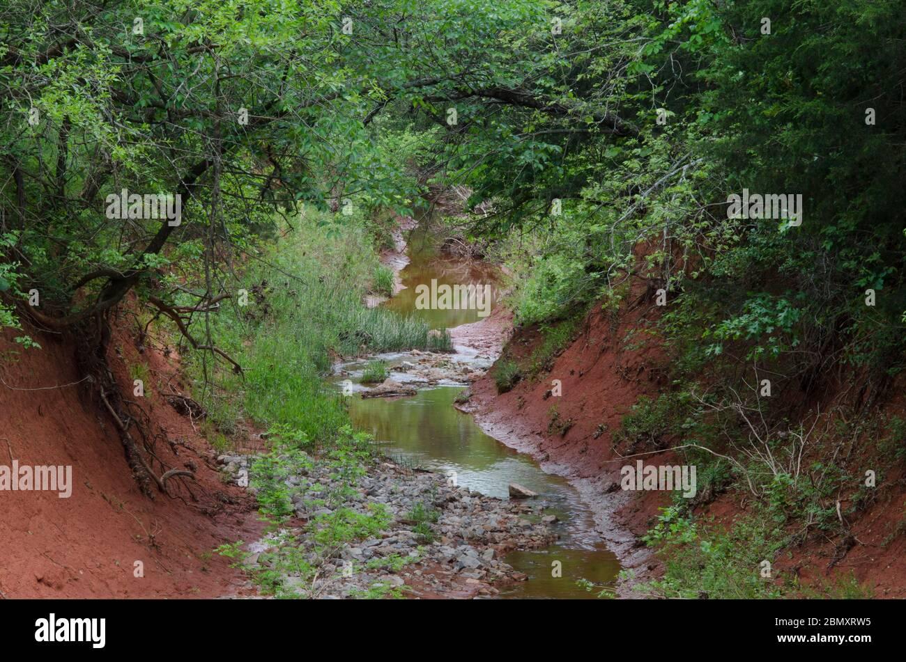 Little Buckhead Creek, en el área de gestión de la fauna de Lexington, Oklahoma Foto de stock