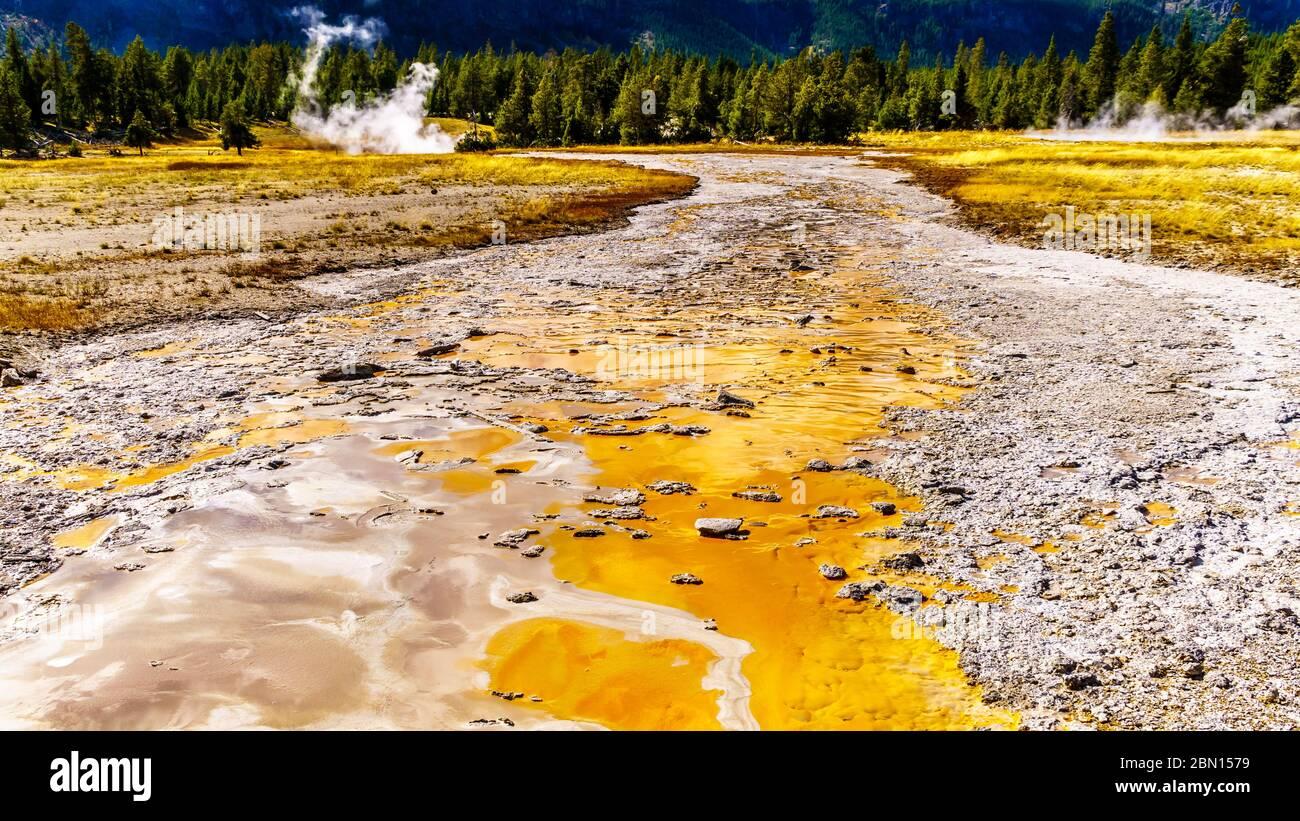 La esterilla bacteriana en el canal de drenaje del Gran Geyser en la Cuenca del Geyser Superior a lo largo del sendero Continental divide en el Parque Nacional Yellowstone Foto de stock