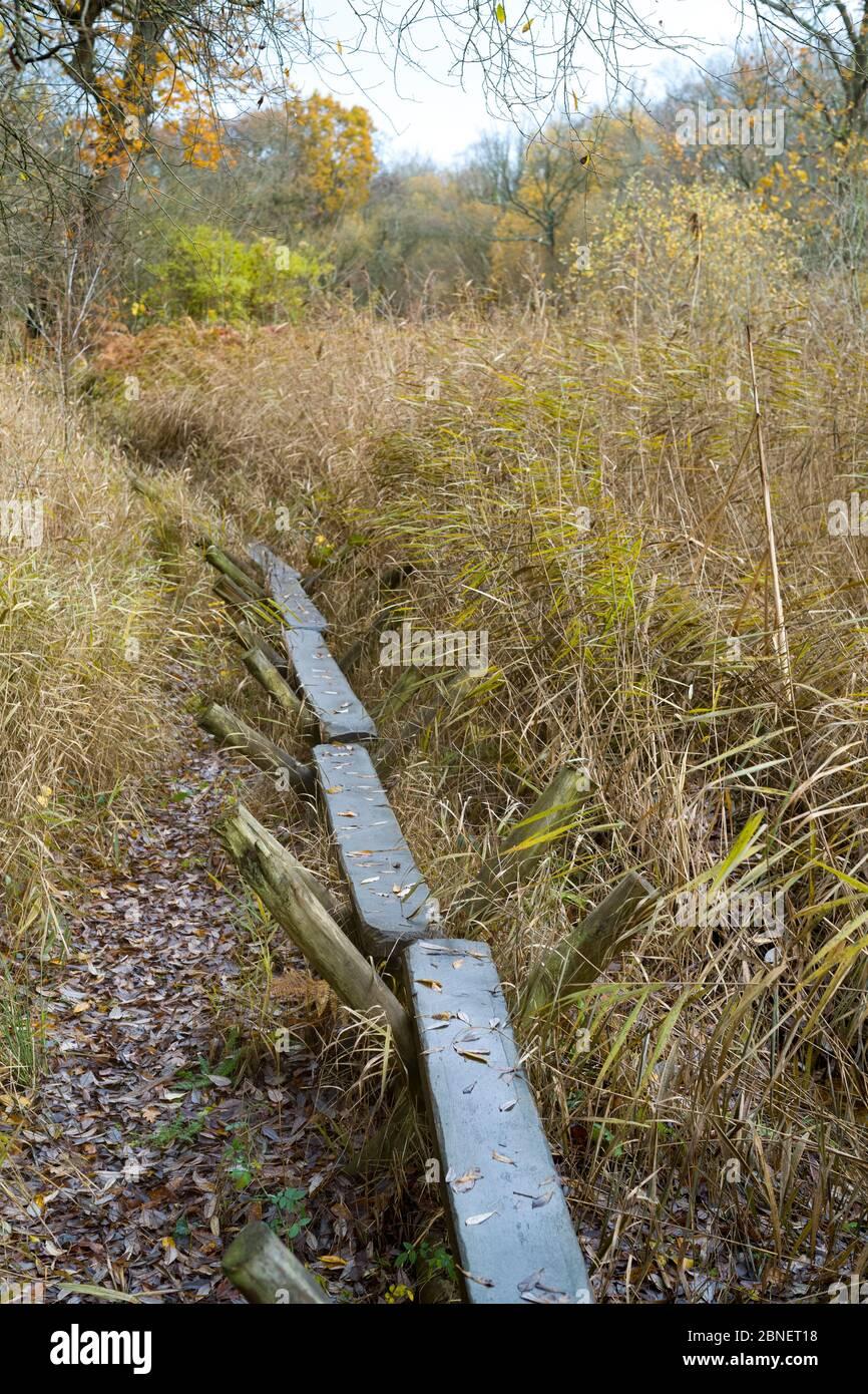 Réplica de la pista dulce - antigua vía construida en tiempos neolíticos cruzando el pantano de caña de las marismas de Avalon con polos conducidos a la turba, Somerset, Foto de stock