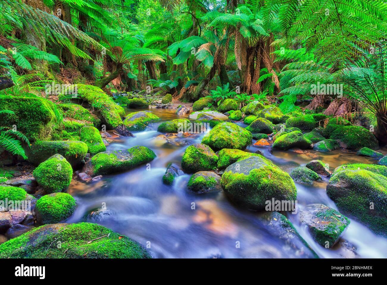 Exuberante vegetación verde en la selva tropical de Columba creek, Tasmania. Foto de stock
