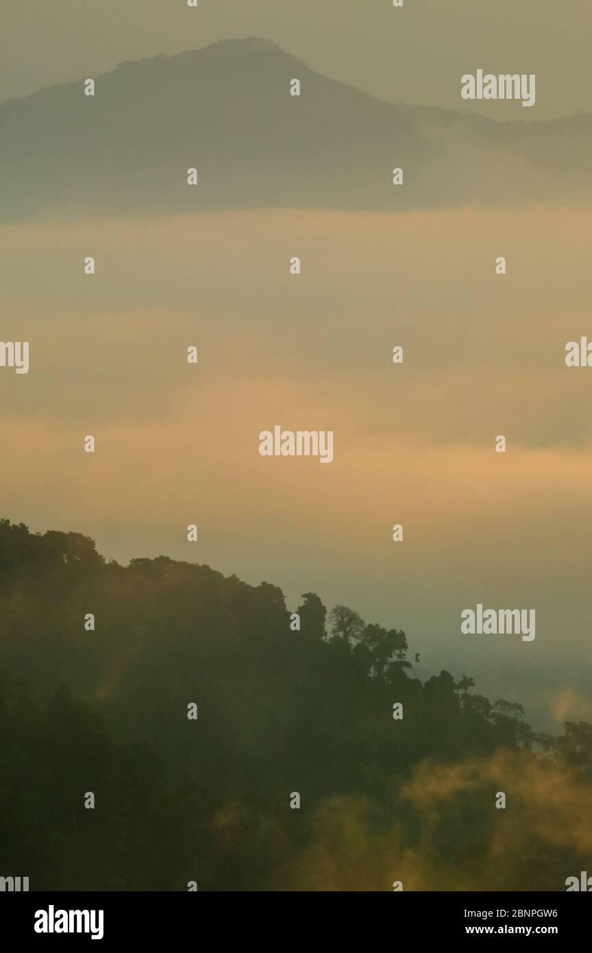 Luz y niebla a primera hora de la mañana en el Parque Nacional Darién, visto desde el Cerro Pirre, provincia de Darién, República de Panamá. Foto de stock
