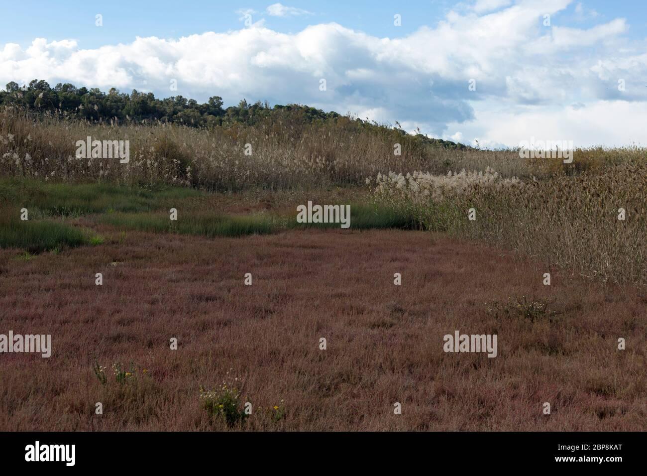La reserva natural del parque del río Alcantara, Sicilia, Italia Foto de stock