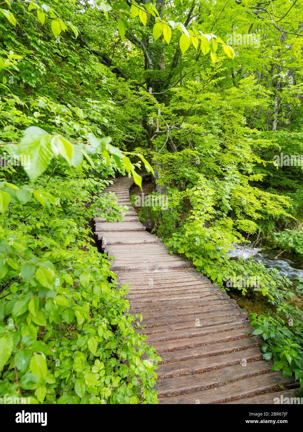 Plitvice lagos intenso bosque verde intenso en la temporada de primavera en Croacia Europa camino vacío Foto de stock