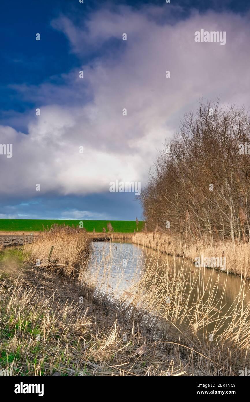 Paisaje en los países Bajos con un río, pastos y un cielo dramático, reflejo en el agua. Los árboles en el fondo. Foto de stock